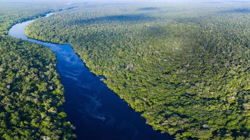 Amazon Rainforest.jpg