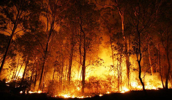 Africa Fire.jpg