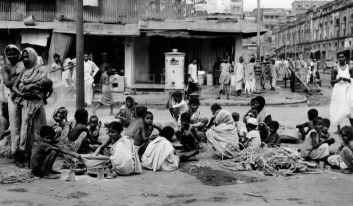 Great Bengal Femine.png