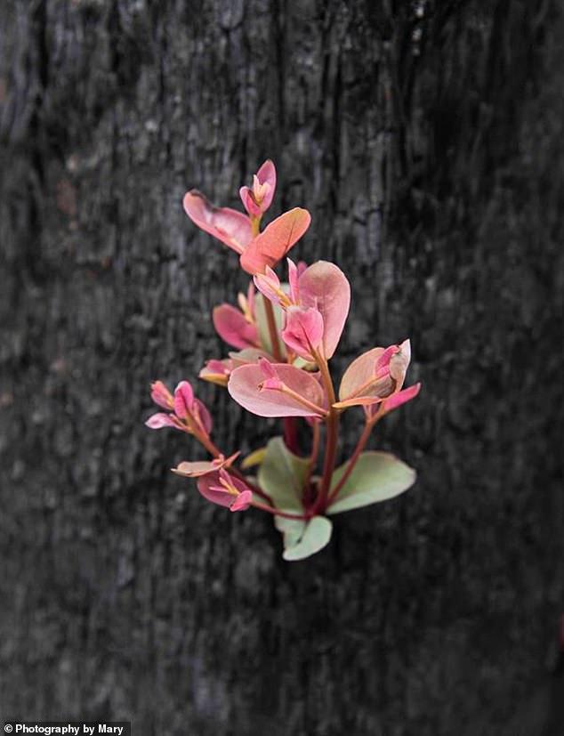 Flower Australia.jpg